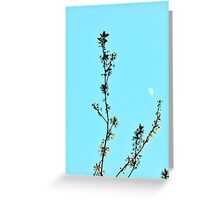 cherry blossom against a blue sky Greeting Card