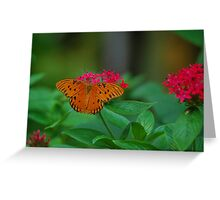 Orange butterfly on red flowers Greeting Card
