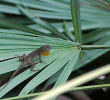 Lizard on palm frond by Ben Waggoner