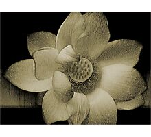 The LoTuS Photographic Print