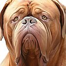 dogue de bordeaux ( french Mastiff) by Cazzie Cathcart