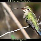 Lil' Darting Darling's ~ Hummingbirds by Kimberly Chadwick