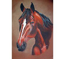 Stockhorse Photographic Print