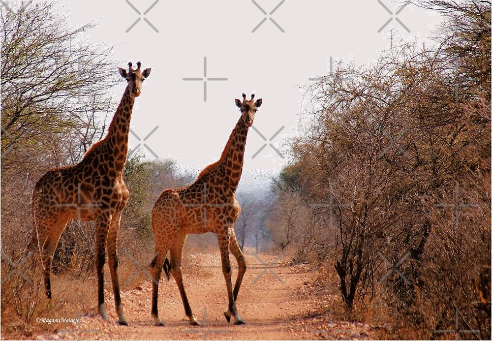 ELEGANT OR NOT? - Giraffa camelopardalis by Magriet Meintjes
