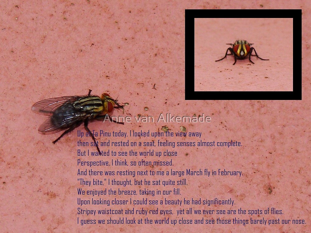 Fly with ruby red eyes by Anne van Alkemade