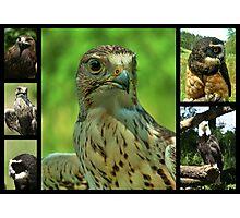 Birds of Prey Collage Photographic Print