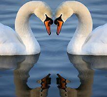 Swan Heart by RedMann