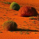 Roly Poly and Sand dunes by bobby1