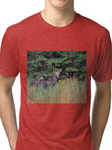 Moose in the meadow Tri-blend T-Shirt