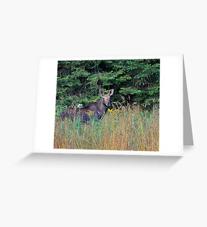 Moose in the meadow Greeting Card