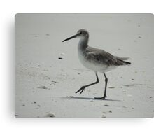 What Willet Do? Canvas Print