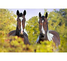 The Nosy Parkers Photographic Print