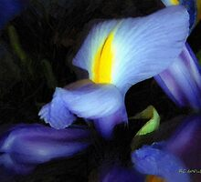 Purple Petal Plumes by RC deWinter