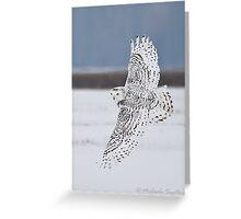 Snowy Owl in flight Greeting Card