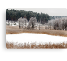 Old lake in winter time Canvas Print