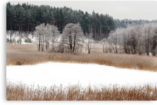 Old lake in winter time by Antanas