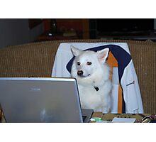 Computer Dog Photographic Print