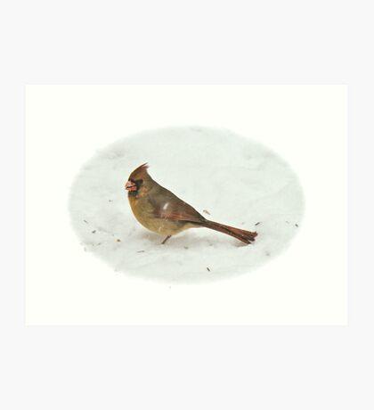 Cardinal (Cardinalis cardinalis) Songbird Art Print