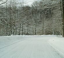 Road Through the Forest by BarbL
