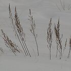 Winter Beach Grasses by BarbL