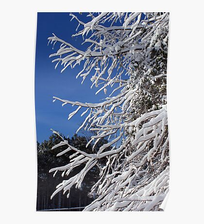 Branches in Snow Poster