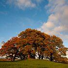 Autumn Rich by StefanFierros