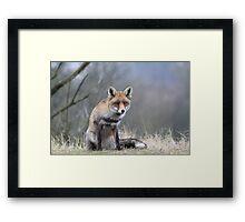 Fox - 1439 Framed Print