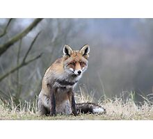 Fox - 1439 Photographic Print