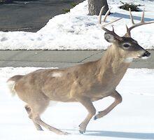 Running Buck by Monica Engeler