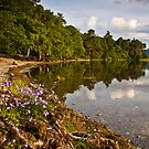 Summer wild flowers at Derwent water by Shaun Whiteman