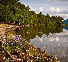 Summer wild flowers at Derwent water by Shaun Whiteman