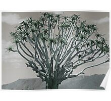 Quiver Tree Poster