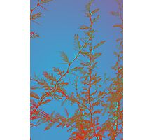 Camel Thorn Tree Branches, Namibia Photographic Print