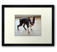 My Sister's Dog, I don't have one! Framed Print