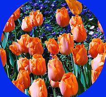 Orange Tulips - Keukenhof Gardens, Holland by MidnightMelody