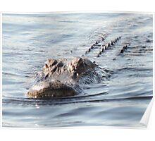 Smile gator smile Poster
