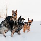 The Pack by Kerri Gallagher