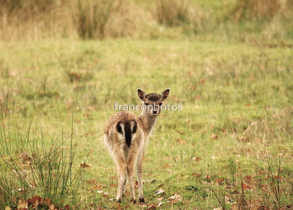 Bambi by Franco De Luca Calce