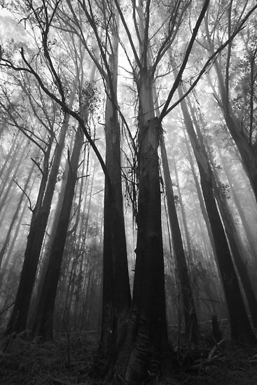 Misty Trees by Sean Farrow