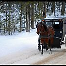 Amish Family in Horse and Buggy by Diane Blastorah