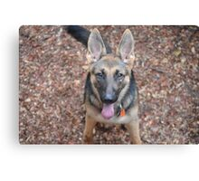 Cute German Shepard Canvas Print