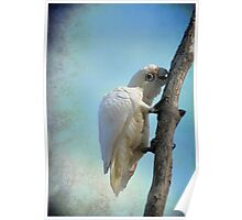 White Cockatoo II Poster