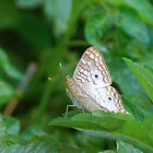 White butterfly on green leaf by Ben Waggoner