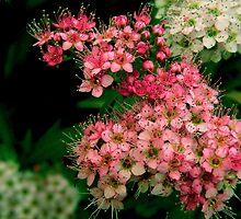 Color de verano........ by cieloverde
