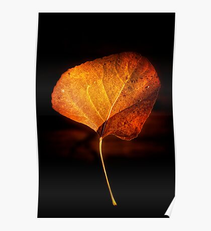 Leaping Leaf Poster