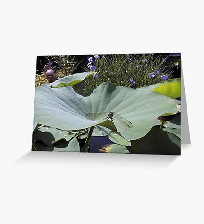 Dragonfly on Lotus Leaf Greeting Card