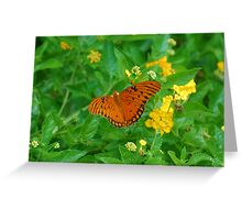 Orange butterfly on yellow flowers Greeting Card