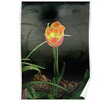 Lone Tulip © Poster