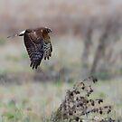 Hunting by David Friederich