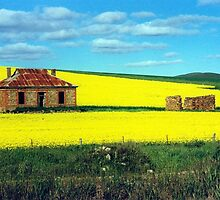 Derelict House in Canola Field by Margaret  Hyde